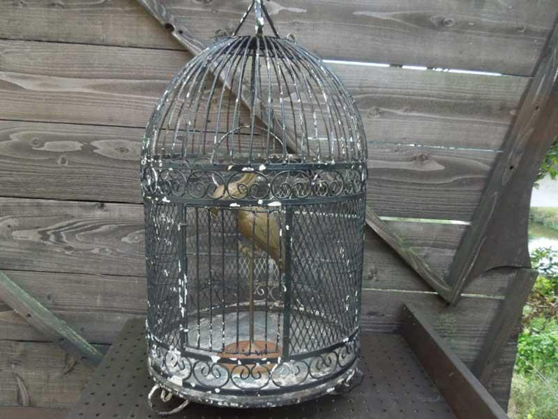 Antique Furniture/1950年代のアイアン製 アンティークの鳥かご